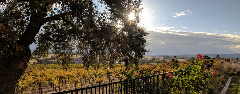 Mitchella Vineyard & Winery Photo
